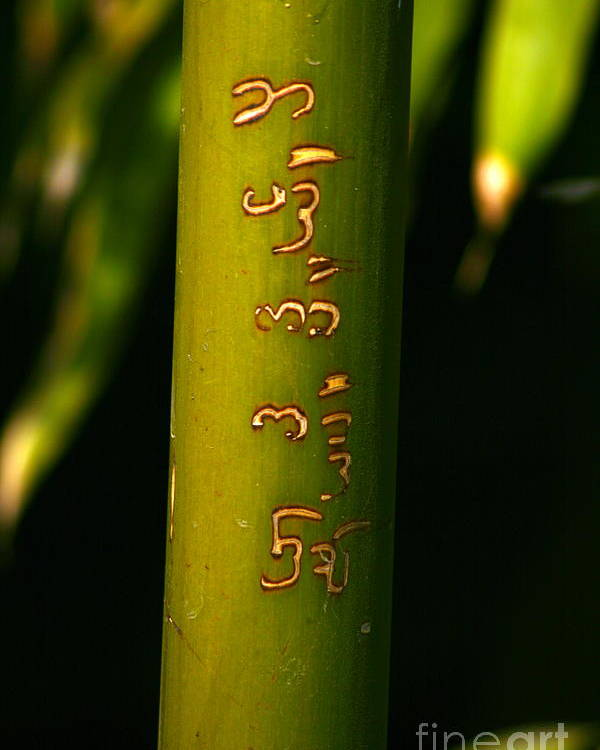Bamboo Poster featuring the photograph Written Bamboo 01 by April Holgate