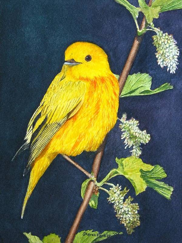 Bird Poster featuring the painting Yelllow Warbler by Sharon Farber