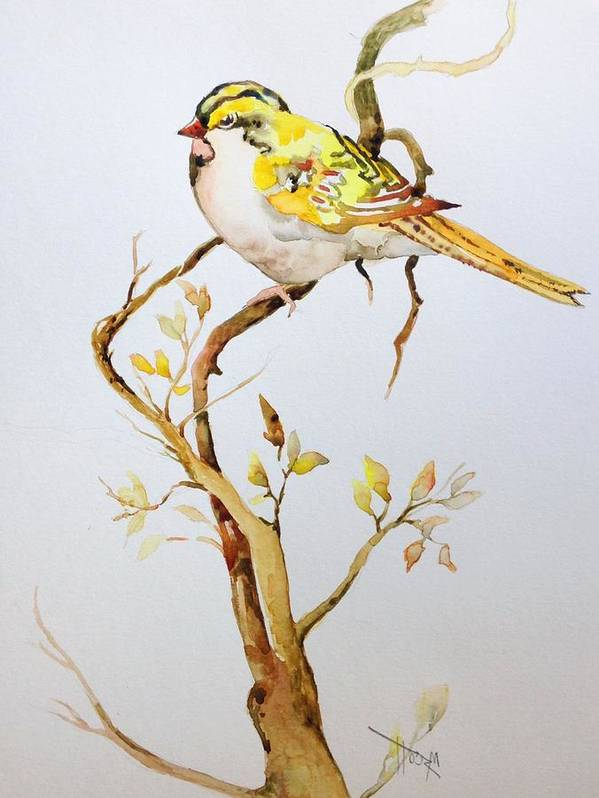 Birds Poster featuring the painting Yellow Bird by Mary Scott