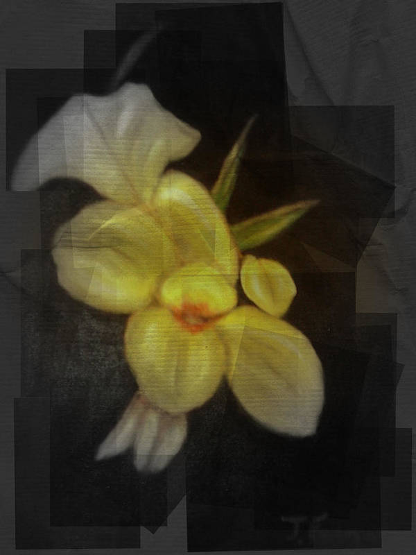 Flowers Poster featuring the mixed media Yellow canna lilies by Joseph Ferguson