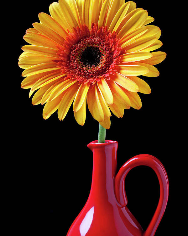 Mums Poster featuring the photograph Yellow Fancy Daisy In Red Vase by Garry Gay