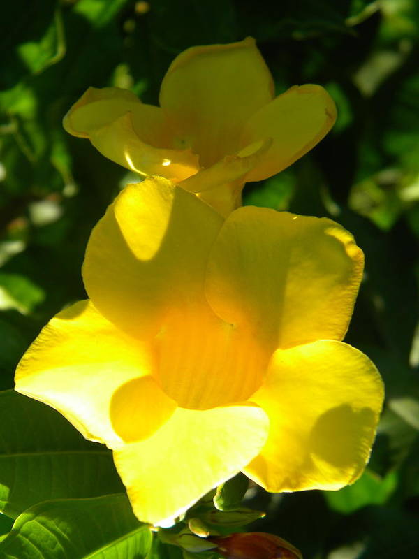 Yellow Flowers Photography Poster featuring the photograph Yellow Flowers by Alyona Firth