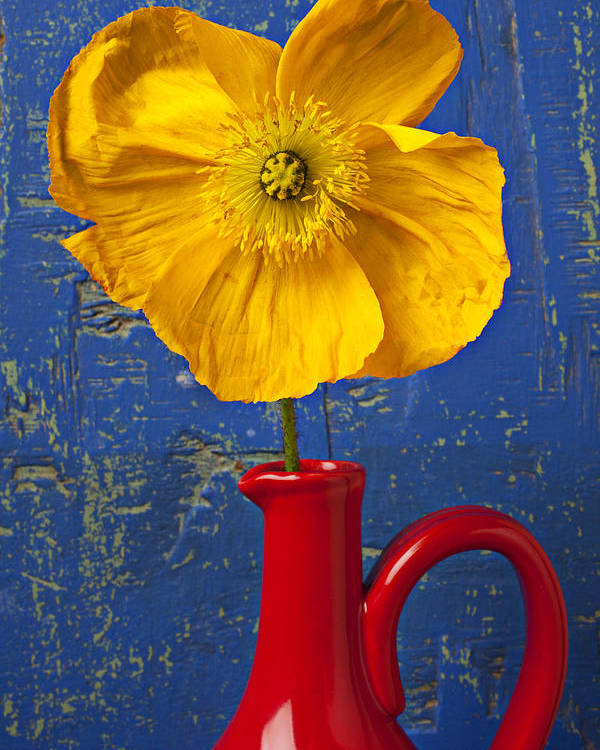 Yellow Poster featuring the photograph Yellow Iceland Poppy Red Pitcher by Garry Gay