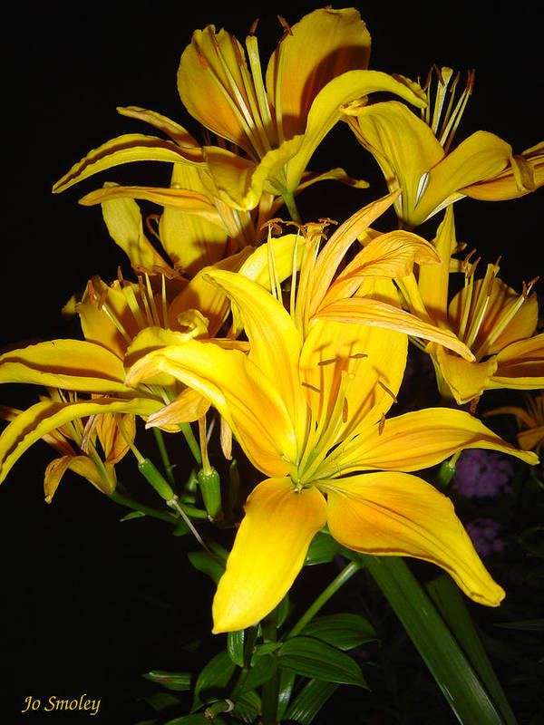 Yellow Lilies Bouquet Poster featuring the photograph Yellow Lilies by Joanne Smoley
