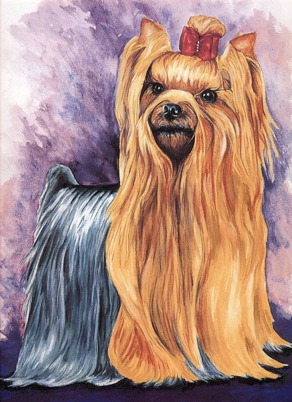 Yorkshire Terrier Poster featuring the painting Yorkshire Terrier by Kathleen Sepulveda