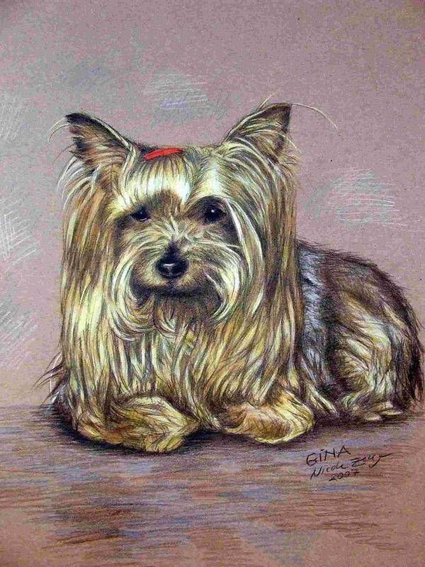Dog Poster featuring the drawing Yorkshire Terrier by Nicole Zeug