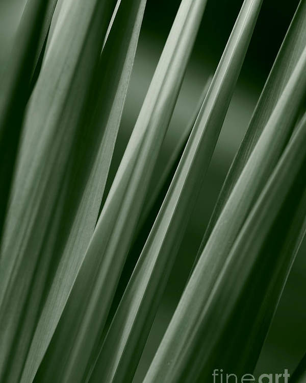 Abstract Poster featuring the photograph Yucca Spikes by Jeannie Burleson