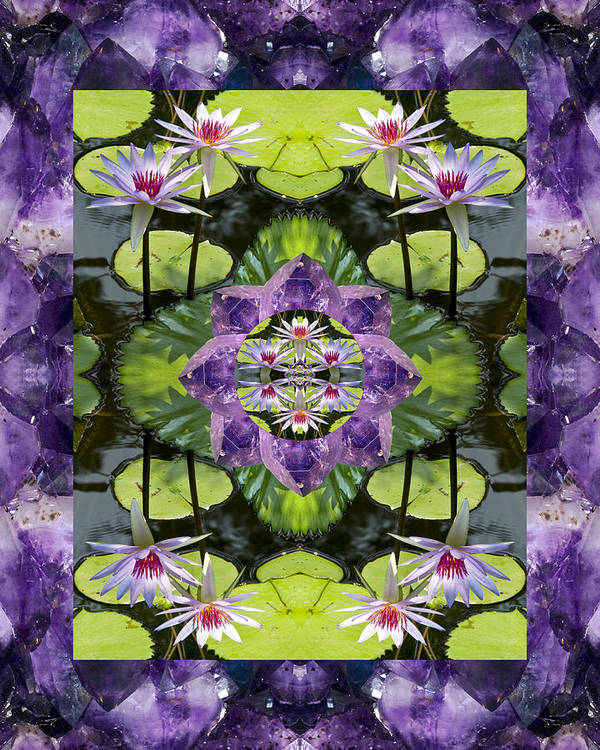 Mandalas Poster featuring the photograph Zen Lilies by Bell And Todd