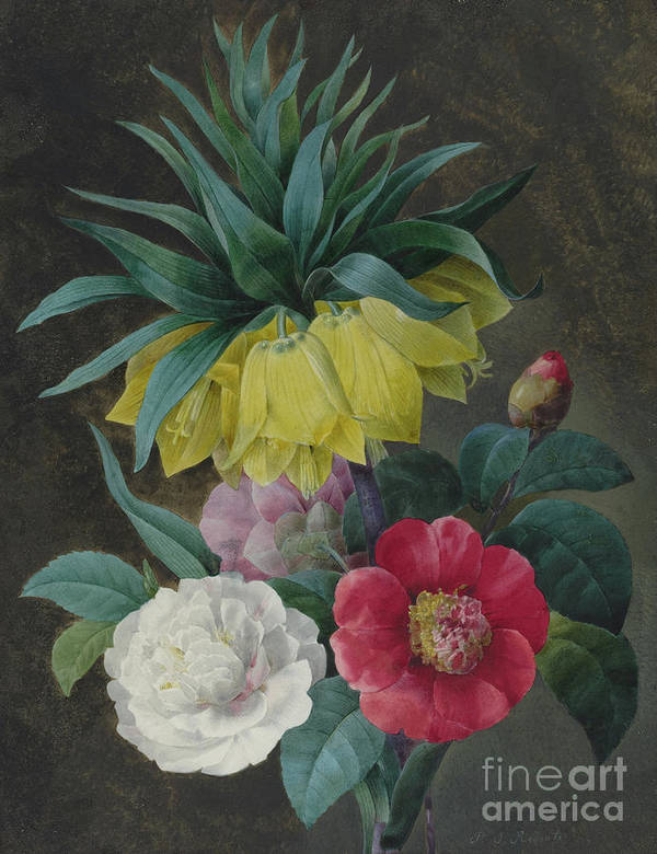 Redoute Poster featuring the painting Four Peonies And A Crown Imperial by Pierre-Joseph Redoute