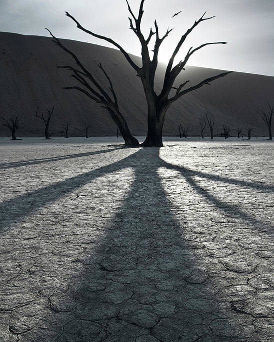 Deadvlei Poster featuring the photograph 900 Years After by Sebastien Del Grosso