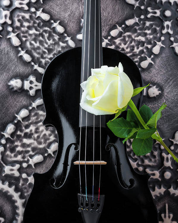 Violin Poster featuring the photograph Black Violin And White Rose by Garry Gay