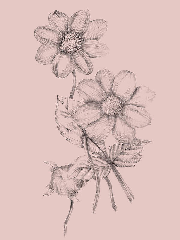 Flower Poster featuring the mixed media Blush Pink Flower Sketch by Naxart Studio