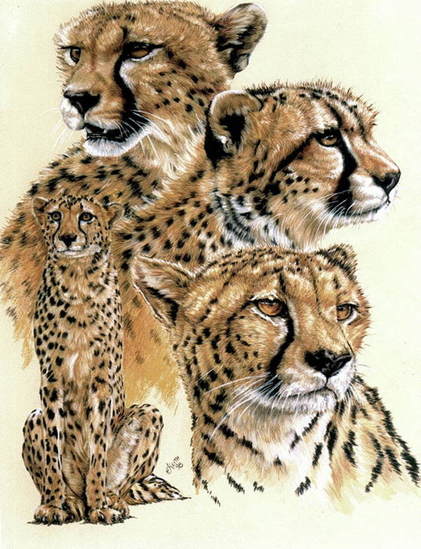 Cheetah Poster featuring the pastel Celerity by Barbara Keith