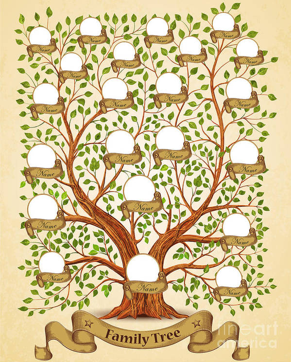 Template Poster featuring the digital art Family Tree Template Vintage Vector by Yayasya