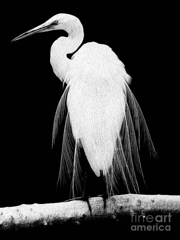 Digital Painting Poster featuring the digital art Great Egret In Full Bloom I - R by Kenneth Montgomery