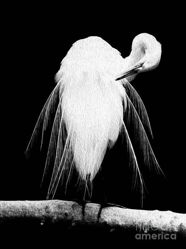 Digital Poster featuring the digital art Great Egret In Full Bloom 3 by Kenneth Montgomery