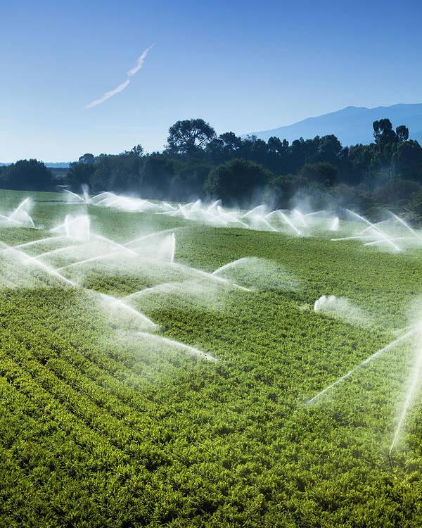 Irrigation Sprinkler Watering Crops On Poster by Pgiam