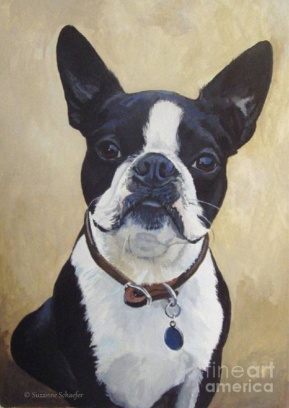 Acrylic Painting Poster featuring the painting Joey the Boston Terrier by Suzanne Schaefer
