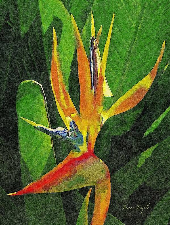 Bird Of Paradise Poster featuring the digital art Subject Paradise by James Temple
