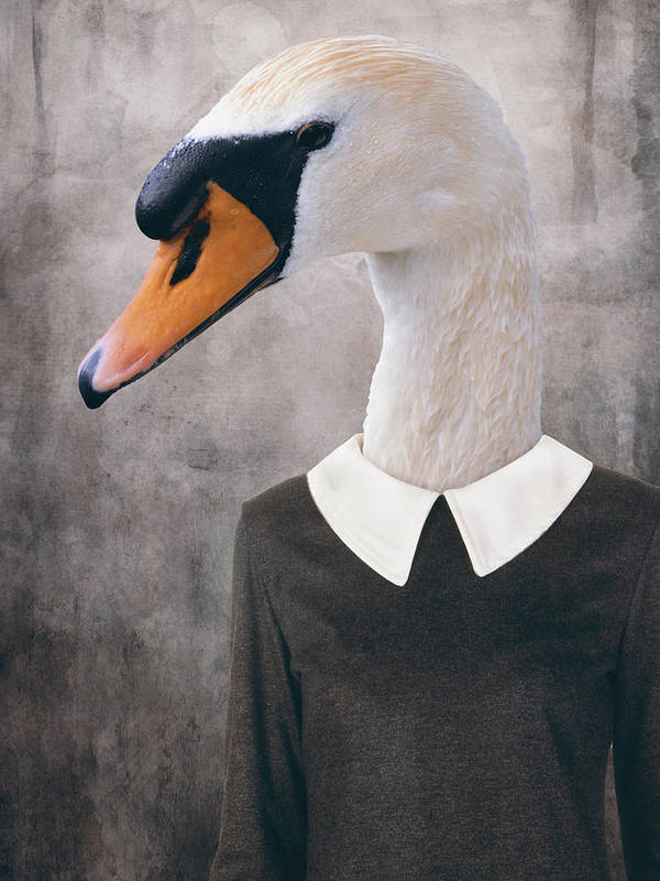 Swan Poster featuring the digital art Swan Portrait by Mihaela Pater