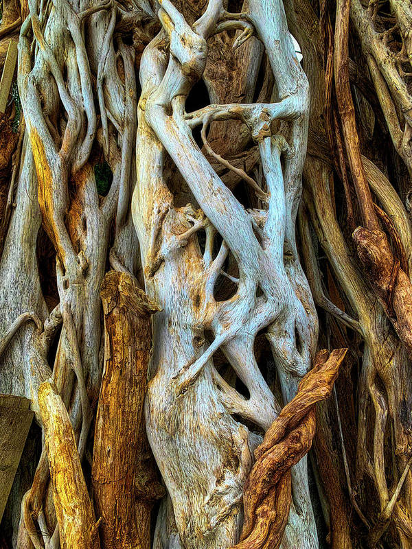 Twisted Poster featuring the photograph Twisted Tree Limbs by Garry Gay