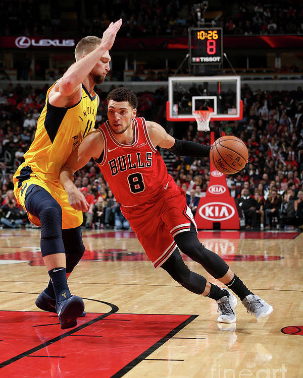 Chicago Bulls Poster featuring the photograph Zach Lavine by Gary Dineen