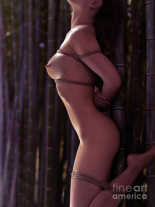 Photo of woman stomach with artistic rope bondage shibari