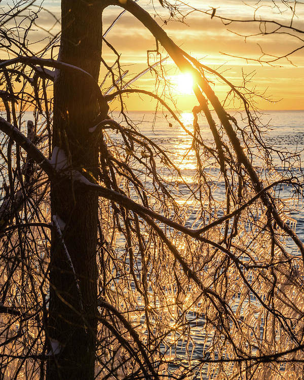 Screened Sunrise Poster featuring the photograph Lacy Ice Screen - Sunrise Sub-framed With A Filigree Of Icicles by Georgia Mizuleva