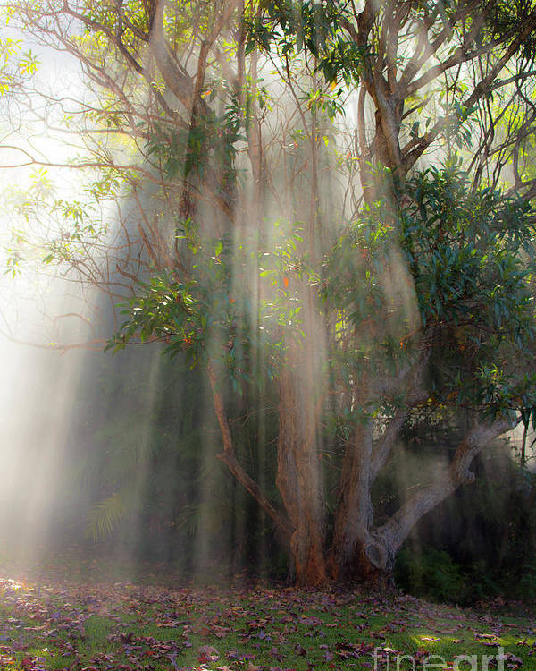 Fall Poster featuring the photograph Lightbeams through tree by Sheila Smart Fine Art Photography