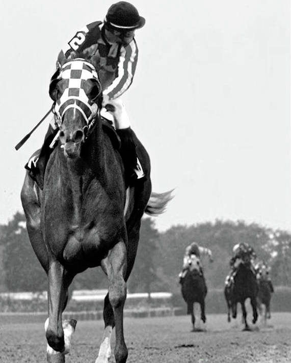 Looking Back Poster featuring the painting Looking back, 1973, Secretariat, stretch run, Belmont Stakes by Thomas Pollart