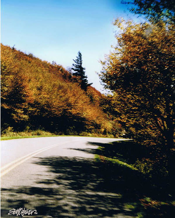 High In The Great Smoky Mtn. As You Round A Curve Stands This Noble Spruce. Poster featuring the photograph Single Spruce by Seth Weaver