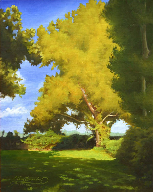 Sycamore Tree Poster featuring the painting Sycamore by Gary Hernandez