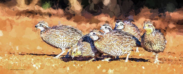 Northern Bobwhite Poster featuring the digital art Northern Bobwhite Digital Art by Carol Fox Henrichs