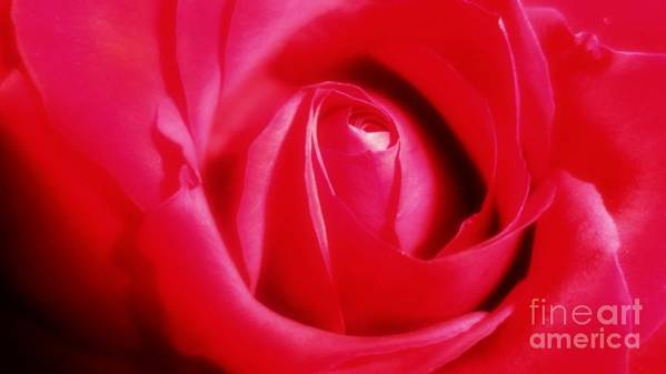 Rose Poster featuring the photograph Her Lovely Rose by JoNeL Art
