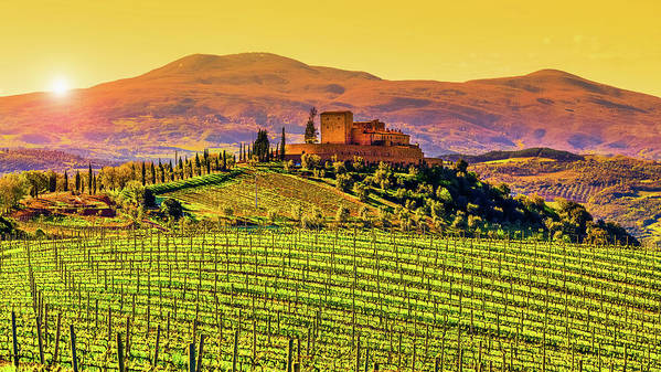 Scenics Poster featuring the photograph Vineyard In Tuscany by Deimagine