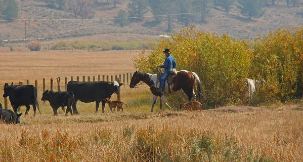 Cowboy Poster featuring the photograph Wyoming Cowboy by Heather Coen