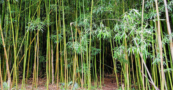 Bamboo Chimes Poster featuring the photograph Bamboo Chimes, Waimoku Falls trail, Hana Maui Hawaii by Michael Bessler
