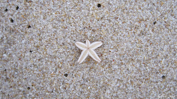 Sylt Poster featuring the photograph Small Star Fish by Heidi Sieber