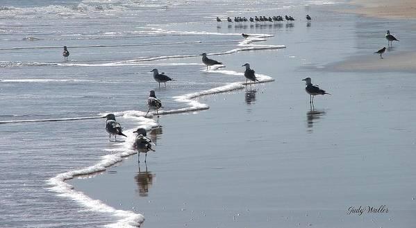 Beach Poster featuring the photograph Sunning Gulls by Judy Waller
