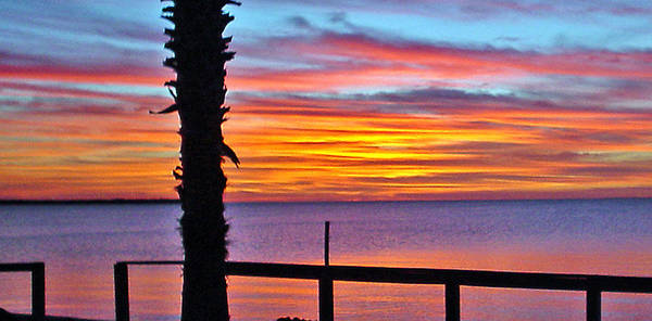 Sunset Poster featuring the photograph Palm Sunset by Norman Johnson