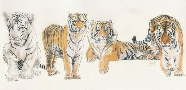 Tiger Poster featuring the mixed media Tiger Wrap by Barbara Keith