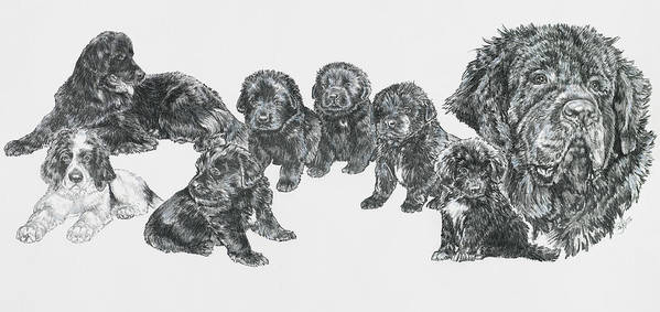 Puppies To Full Grown Newfoundland Poster featuring the painting Growing Up Newfoundland by Barbara Keith