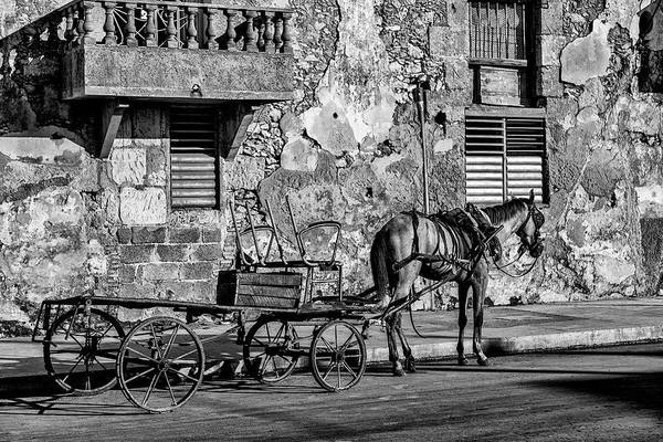 Cuban Horse Power; Cuban; Horse; Power; Horse And Carriage; Carriage; Hp; Cuba; Photography & Digital Art; Photography; Photo; Photo Art; Art; Digital Art; 2bhappy4ever; 2bhappy4ever.com; 2bhappy4evercom; Tobehappyforever; Poster featuring the photograph Cuban Horse Power BW by Erron
