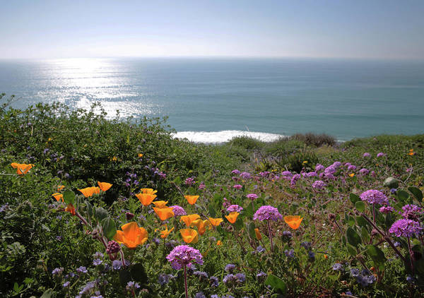 Wildflowers Poster featuring the photograph Coastal Bouquet by Robin Street-Morris