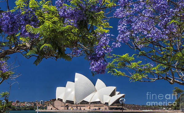 Sydney Opera House Poster featuring the photograph Jacaranda spring by Sheila Smart Fine Art Photography