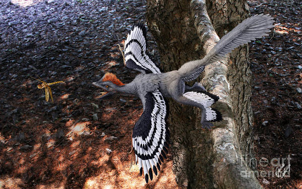 Paleoart Poster featuring the digital art Anchiornis huxleyi by Julius Csotonyi
