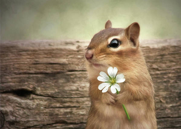 Chipmunk Poster featuring the mixed media Welcome Spring by Lori Deiter