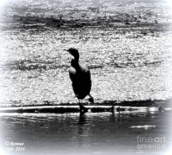 Birds Poster featuring the photograph Alone Time by Rennae Christman