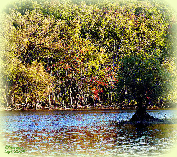 Trees Poster featuring the photograph Almost Fall by Rennae Christman