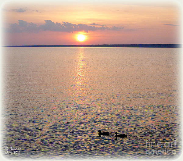 Sunset Poster featuring the photograph Early Evening Swim by Rennae Christman